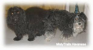 two dogs standing to on a tiled floor