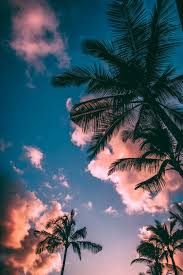Let s go coconuts enjoy 10 tropical iphone wallpapers. 40 000 Best Iphone Wallpaper Photos 100 Free Download Pexels Stock Photos