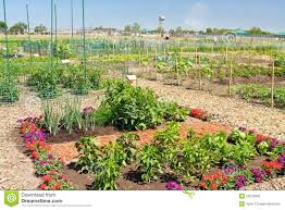 Small Picture Community Garden Plot Stock Photography Image 25278062