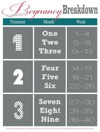 Pregnancy Chart In Months Best 25 Trimester Chart Ideas On Pinterest Pregnancy