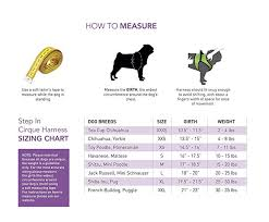 Puggle Growth Chart Rc Pet Products Cirque Soft Walking Step In Dog Harness