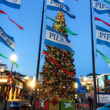 The 10 Best Trees To Have Sex With In San Francisco  BrokeAss Christmas Tree In San Francisco