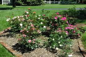 Small Picture Large cul de sac backyard desperate need of rose garden design