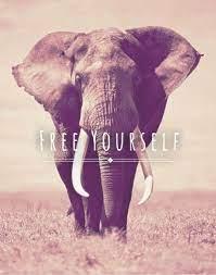 Elephant iphone wallpaper ...