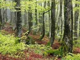 Rain Cool Forest Green Great Fresh Desktop Backgrounds Forest HD