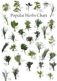Herb Charts My Web Plant