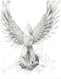 Drawings Of Phoenix Drawn Phoenix Sketch Free Clipart On Dumielauxepices Net