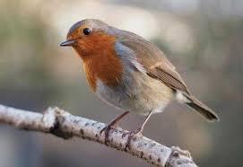 Ali jaya murai tv 09 august 2020. Download Suara Burung Decu Mini Ngerol Gacor Mp3 Harga