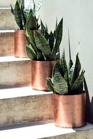 10 Houseplants That Actually Clean the Air You Breathe. House Plants DecorIndoor  ...