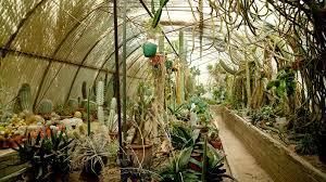 entering cactus heaven inside the moorten botanical garden of palm springs