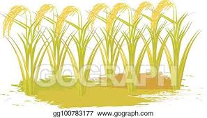 rice plant clipart. Contemporary Clipart Rice Plant Vector Design To Rice Plant Clipart