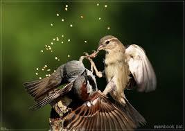 Птицы | Записи в рубрике Птицы | Дневник Saechka62 ...
