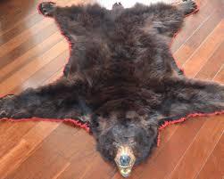 bear head rug fancy bear skin rug with head home kitchen design with bear skin rug