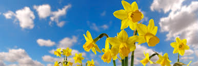 Free Spring Spring Clean Your Household Spending Download Our Free Guide