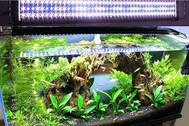 aquarium lighting guide for plants lilianduval