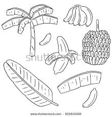 Small Picture Banana Tree Vector Stock Images Royalty Free Images Vectors