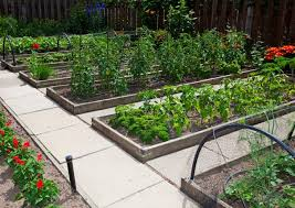 um size of organic gardening raised garden bed home garden garden soil how to