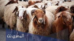 ماذا يقال عند ذبح الأضحية عن الميت - المصري نت