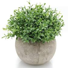 Decorative Plants For Home Home Landscaping Garden Decoration Decorative Plants For Home