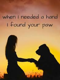 Quotes About Pets And Friendship Custom Dog Shaming Pets Pinterest Dog Paws Dog And Animal