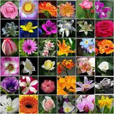 all about news flower names list and meanings of flowers