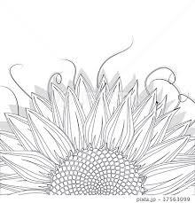 花 ひまわり 白黒 植物 向日葵のイラスト素材 Pixta