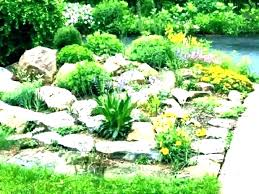 rockery designs for small gardens rockery designs for small gardens small garden rocks small rockery garden rockery designs for small gardens