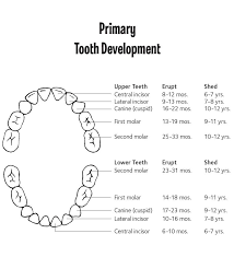 Tooth Chart For Losing Teeth Primary Tooth Chart Bountiful Dental