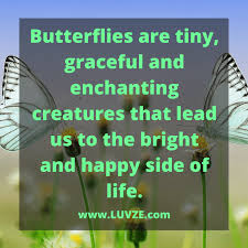 Metamorphosis Quotes Beauteous 48 Butterfly Quotes And Sayings