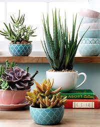 Teacup Succulent Garden Ideas Easy Video Tutorial
