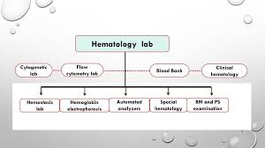 Hematology Flow Chart What Is The Role Of Hematologists Ppt Download