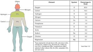 Composition of the human body - Wikiwand