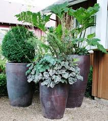 Lovely Design For Potted Plants For Shade Ideas Patio Plants For Shade  Infodik