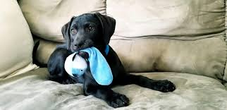 20 chew toys for puppies that ll save your shoes the dog people by rover