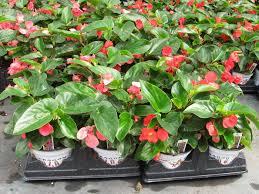 i plant flowering plants in spring