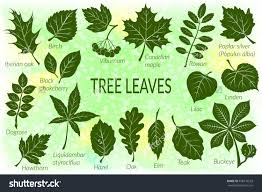 Ohio Leaf Identification Chart Pictograms Tree Leaves Dogrose Oak Iberian Oak Maple