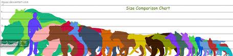 Pictorial Rabbit Size Chart Random Rabbit Ramblings