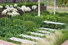 an attractive shady garden with ferns