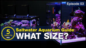 Saltwater Aquarium Lighting Guide The Secret To Selecting The Right Size And Shape For Your First Saltwater Aquarium Choose Wisely