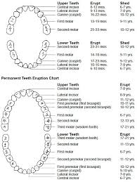 Orthodontic Tooth Chart Our Blog Orthodontist Invisalign Phoenix Scottsdale Az