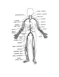Human Body Coloring Pages   jacb.me