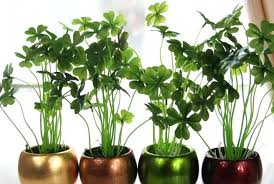 small office plant. Terrace Garden Plants Exquisite Plant Topiary Plastic Home Water Small Fake Office In India
