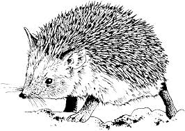 Small Picture Free Hedgehog Coloring Pages