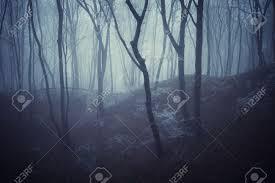 Horror Scène Van Een Donker Bos Met Blach Bomen En De Blauwe Mist