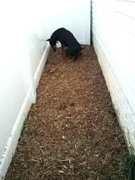 dog outdoor potty area grass balcony bathroom build your own apartment