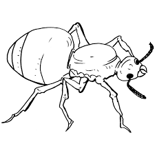 Small Picture Awesome Ant Coloring Page Black White Ideas New Printable