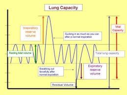 Volume And Capacity Chart Anatomy Of Breathing