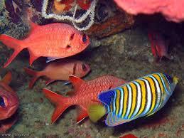Fiji Fish Feasting Fun Navutu Stars Yasawa Islands Resort