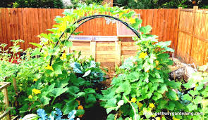 Small Picture Small Space Vegetable Garden Design small space backyard vegetable