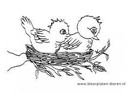 Kleurplaat Vogel Nestje Kleurplaten Dierenkleurplaten Dieren